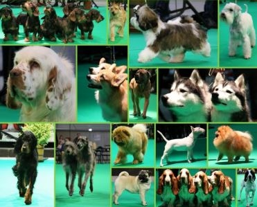 Exposition Canine Nationale à Vesoul