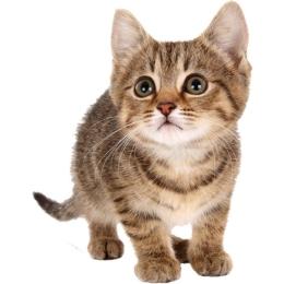 chaton mignon a donner amazing photo de chat mignon se rapportant chatons trop mignons qui vont. Black Bedroom Furniture Sets. Home Design Ideas